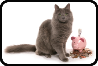 Cat with Piggy Bank